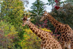 Brooklyn zoo NY and Prospect park zoo