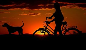 Moving to Brooklyn with a dog and a bike